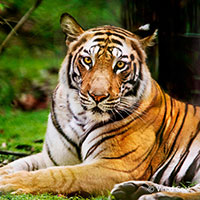 Bandhavgarh - Where Tiger Rules