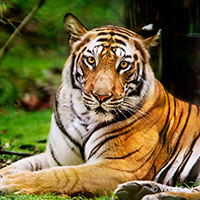 Bandhavgarh – Where The Tiger Rules
