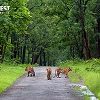 Tadoba – The Jewel of Vidarbha