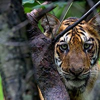 Tadoba –Jewel of Vidarbha