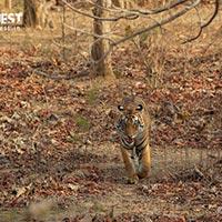 Panna Tiger Reserve and Khajuraho, Madhya Pradesh