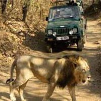 Wildlife and Heritage of Gujarat Tour
