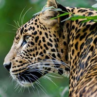 Odisha Wildlife Tour