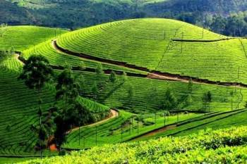 Kerala Package Rs.5,999/- Every Friday Departures Tac Applicable