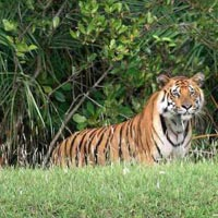 Sundarbans Package 2 Night 3 Days Tour