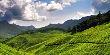 Kerala Munnar Travel Guide