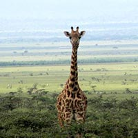 5-Days Masai Mara - Lake Nakuru And The Aberdares Classic Tour