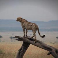 3-Day Masai Mara Offer Tour