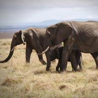 5 days Masai Mara, Lake nakuru, Lake Naivasha and Hells Gate National Parks amazing safari Tour