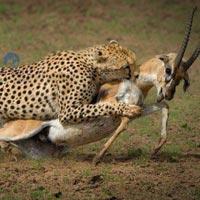 2 - Day 1 Night Masai Mara Short Safari Tour