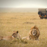 3-Day 2 Nights at Sweetwater'S / Ol Pejeta Conservancy Tour