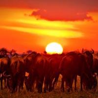 3-Day Samburu-Sarova-Shaba Safari