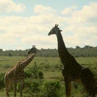 7-Day Private Bush Safari Tour