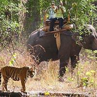 Jabalpur - Bandhavgarh - Pachmarhi Tour