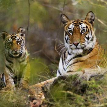 Kanha National Park Tour