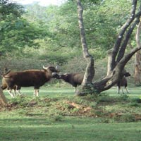 Deluxe Package For Unexplored Wildlife Of Nameri For Couple