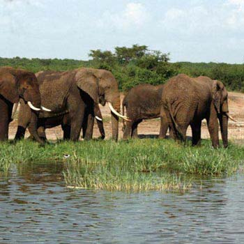 10 Days Uganda Safarii Tour