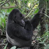 4 Days Lake Mburo and Bwindi Forest National Park Tour
