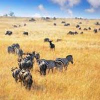 Ngorongoro Safari Tanzania Tour