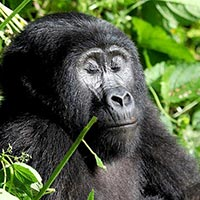 3 Days Uganda Gorilla Safari Tour