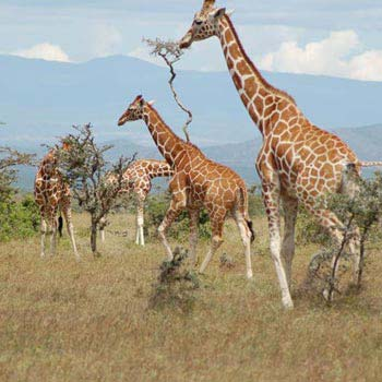 Enchanting Kenya Safari Package