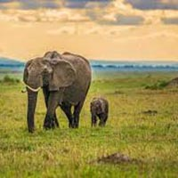 Wild and Beach Kenya Safari Package