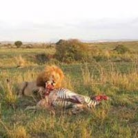 Tsavo West Mombasa Getaway Safari Package