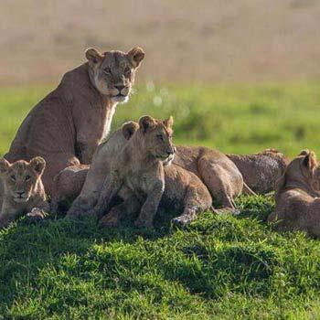 Kenya Wildlife And Beach Safari Package
