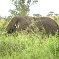 Queen Elizabeth National Park Safari Package