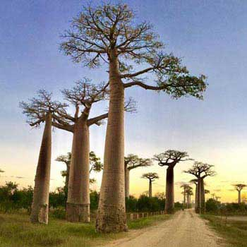 Madagascar Tours Package