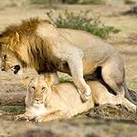 Masai Mara Kenya Tour