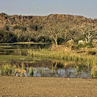 Gujarat Wildlife Tour
