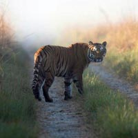 7Nights/8Days Uttrakhand Tour Package