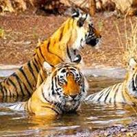 Ranthambore  Wildlife Tour