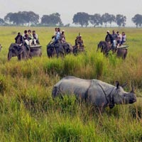 Assam - Wildlife and Devotional Hub Tour