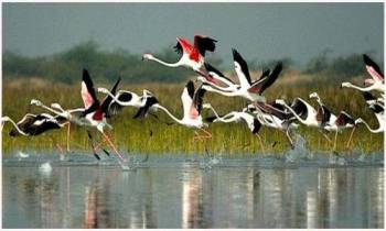 Bharatpur Bird Sanctuary Tour