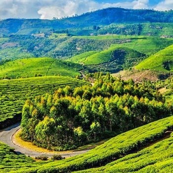 Beautiful Ooty Tour