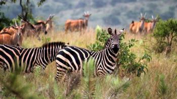 10 Days Best of Uganda Safari Tour