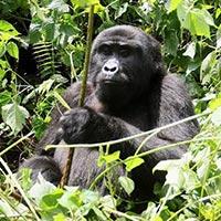 10 days Safari in Uganda