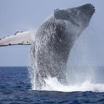 Whale Watching in Sri Lanka 5D/4N Tour