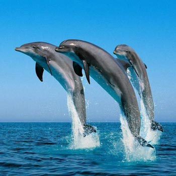 Frolic with Dolphins and Whales 5N/6D Tour