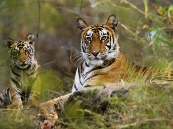 16 Days The Best of Indian Wildlife Tours