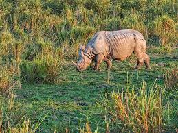 4 Days Land of Rhino Tour