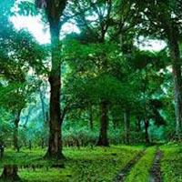 3 Days Wayanad Tour with Vythiri Treehouse