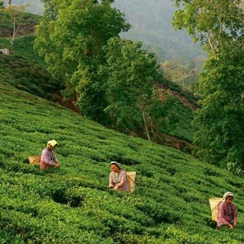 Darjeeling 2 star Package for 4 Days Tour