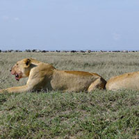 Wildlife And Cultural Tour