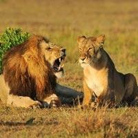 Masai Mara Budget Safari Tour