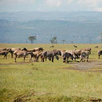 2 Days / 1 Night) Masai Mara Game Reserve - Flying Package) Tour