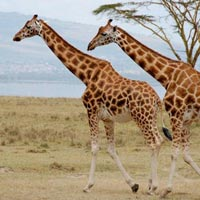 Samburu 2 Nights Road Package