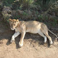 Amboseli 2 Nights/Samburu 2 Nights/Maasai Mara Flyin...